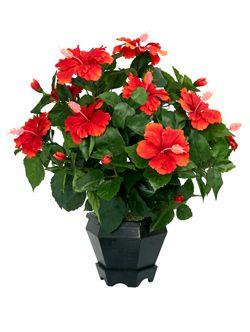Кімнатні рослини та квіти