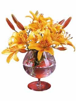 Луковицы цветов - Весна