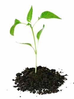 Почва для пересадки цветов