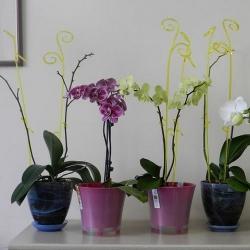 Палочка для орхидей К14.020.60 Розовая