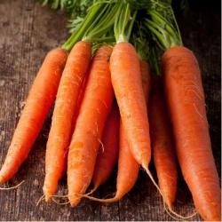 Морковь Каротан Поздняя