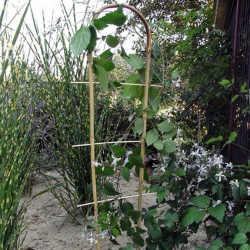 Дуга бамбукова 75