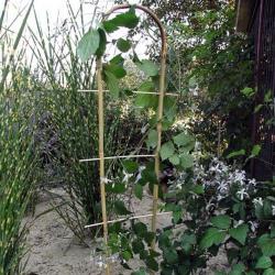 Дуга бамбукова 120