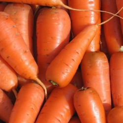 Морковь Каротель