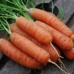 Морковь Чикаго