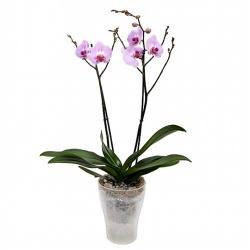 Кашпо для орхидей К14.003.16