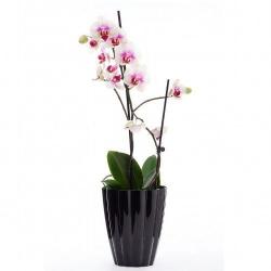 кашпо для орхидей Ромашка хамелеон