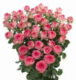 Мелкоцветковая роза Линда (розовоая)