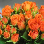 Мелкоцветковая роза Оранжевая