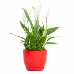 Горшок для цветов Класик с подставкой 13 КРАСНЫЙ
