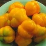 Перец Ратунда желтая