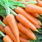 Морковь Курода шантане