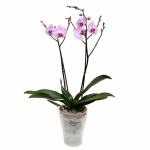 Кашпо для орхидей К14.002.20