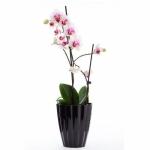 Кашпо для орхидей Ромашка желтый