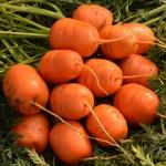Морковь Парижский рынок комнатная