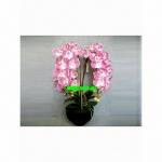 Искусственные цветы К15.010